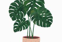 Illustration botanique - Feuillages / Inspiration pour illustration botanique - Feuillages
