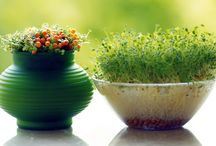 Ghivece plante