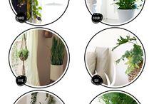 Houseplants / by Annie Hayner-Sprague