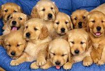 Love dog's / O melhor amigo.