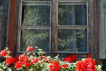 Geraniums...my fave... / Flowers