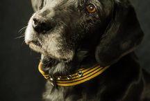 canvasco URBAN DOGS Hundeshootings / Wir fotografieren regelmäßig unsere Hunde oder auch andere Hunde für unsere Kollektion. Da entstehen die lustigsten und schönsten Fotos von Hunden mit unseren canvasco Hundesachen. #Dogbed #Leasch #Cushion #Dog