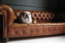 Classics in Furniture