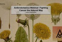 Anthrobotanica