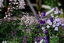 plant combinations