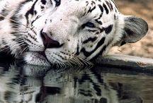 animal kingdom / by Bonnie Jones