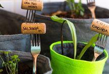 Plantas - plantar e cuidar