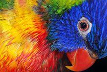 Pastels - animals