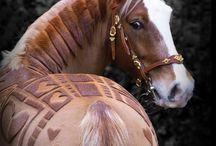 Horse's haircuts