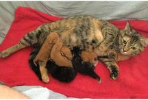 Mom Scarlet Chilliwack Bottle Depot #MascotCat &  Kittens