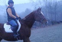 Horses adoptable/need sponsors