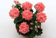 Цветы миниатюры