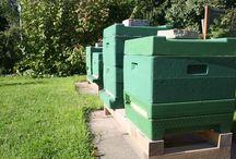 Imkerei - Bienenbeute / Bienenbeuten für die Bienen einer Imkerei