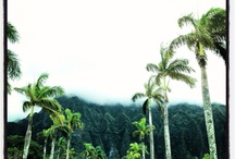 Oahu & Maui  / by Sarah Paulsen