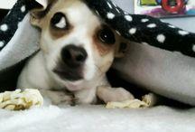 Tom ♡♡ / Our Dog ♡♡