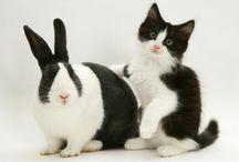 I <3 Animals