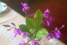 My flowers- i miei fiori