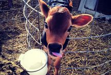 Farm Living / Ranching, farming, simple living. / by Glenn Zuiderveld