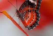 Pillangók és szitakötők 2