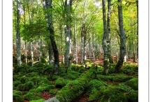33 Parque Natural Urbasa Andía