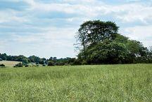 Barrow Farm, Hertfordshire, England
