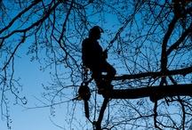 Fotos arborista