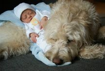 Labradoodle Love :) / by Ashlee Reep