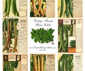 Vintage Seed Packets and Catalogues