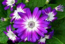 FLORI / Flori din lumea intreaga