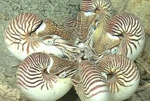 Deep Sea Life / Creatures from the deep sea & ocean floor. Marine life, oceanography and exploration of the sea bed from ~300 m to 6000m+