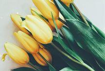 Photos: Le Pouvoir et la Beauté des Fleurs