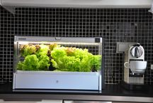 Green Farm - w domu / Własne warzywa z ogródka w kuchni! Trend miejskiego ogrodnictwa to już nie jest futurystyczna wizja, tylko nadchodząca rzeczywistość. Jak wygląda domowy ogród w Twoim mieszkaniu?