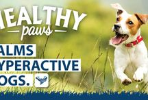 Benefits of Healthy Paws / Our nutritionists have worked really hard to develop a range of dog food that contains not only wholesome natural ingredients but ingredients that have a real benefit to the well being of your dog.