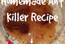 DIY ant killer/ Insect