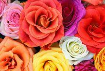 Rose Board / by Madeline Black