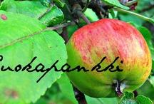 Ruokapankki / http://ruokapankki.blogspot.fi/