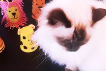 Kitty Cat Crafts