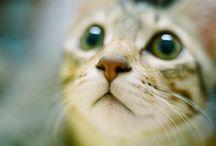 cat .... / by umla umla