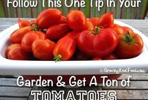 Green Thumb & Gardening / Inspiration for my green thumb (or lack thereof).   #gardening #greenliving #homesteading