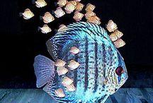 PEIXES ⭐ FISH