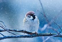 Animals - Birds / by Jan Vafa
