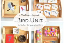 ptaki montessori