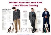 Pit Bull Sitings