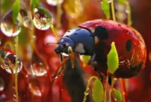 Lady Bug Posse / Things that make me think of my ladies! / by Molly Hauk