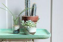 Planten, planten en planten in huis