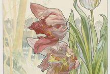 ботаническая илюстрация
