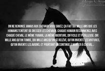 Citation cheval