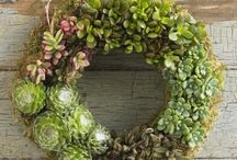Wreaths / by Kay Brown