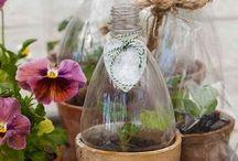 Istutus , taimet ja puutarha