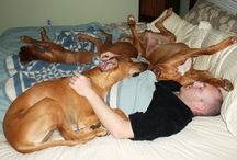 Sleep's Gone To the Dogs
